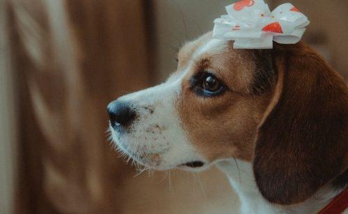 Geschenke für Hunde: So bringst du Hundeaugen zum Leuchten (und deine)