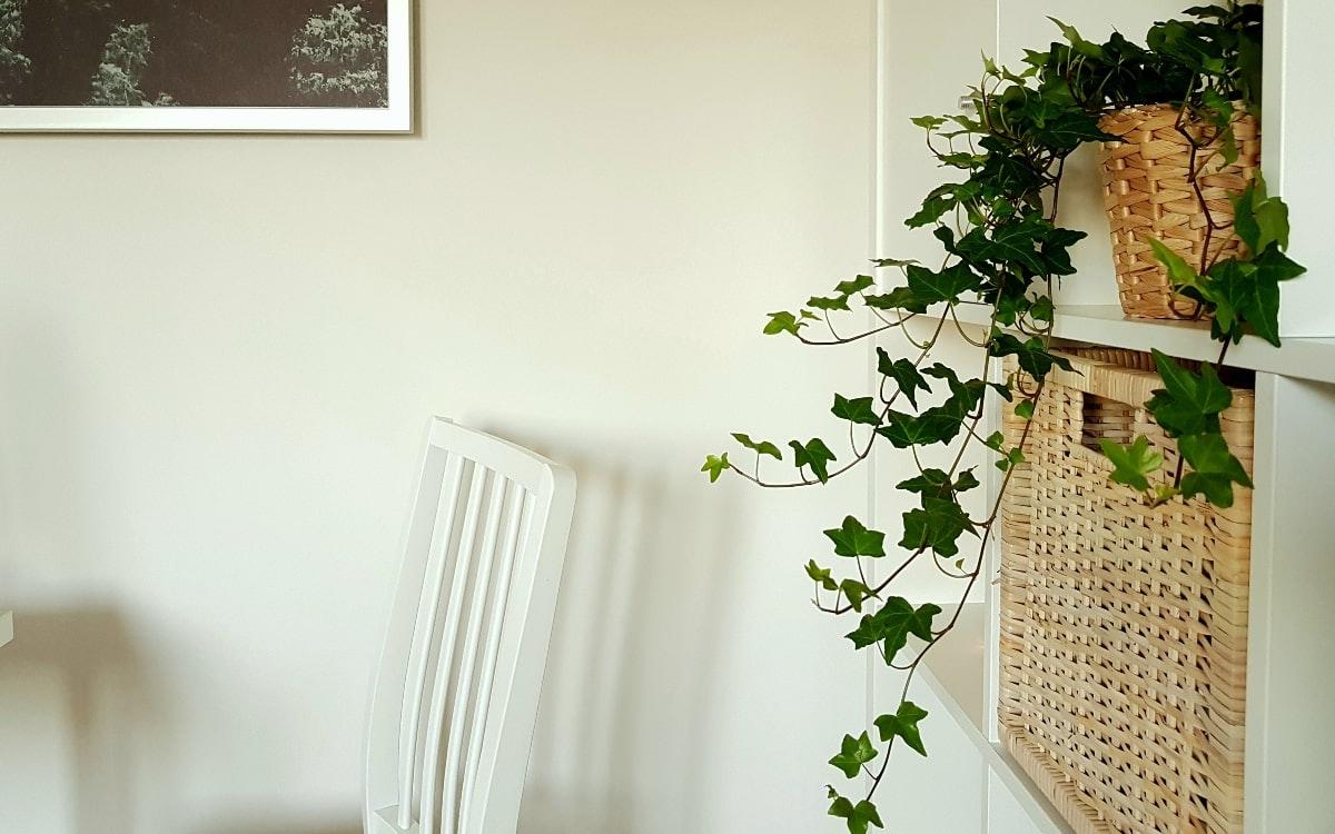 Pflanzen im Schlafzimmer: Wohlige Träume sind garantiert  Perspektief